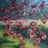 Cerisier-fleurs [Huile -]