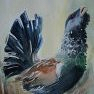 Le grand tétras [Aquarelle - 40 x 30]
