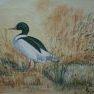 Le canard vert [Pastel - 24 x 30]